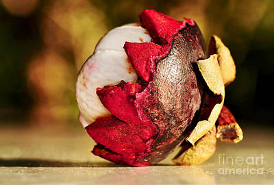 Tropical Mangosteen - Ready To Eat Art Print by Kaye Menner