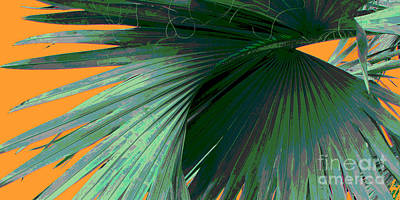 Photograph - Tropical Palm Grand Cayman by Ann Powell