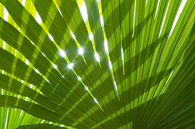 Tropical Palm Leaf Art Print by Amanda Elwell