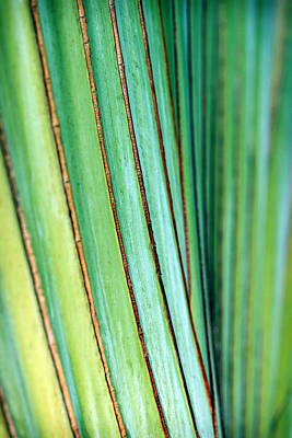 Tree Photograph - Tropical Palm by Marilyn Hunt