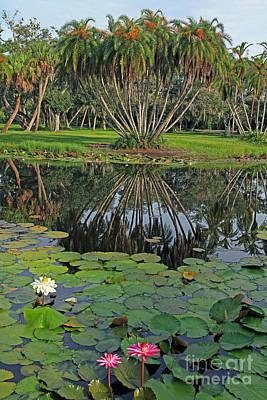 Tropical Splendor Art Print by Larry Nieland