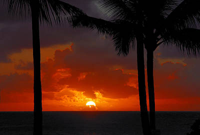 Photograph - Tropical Sun by Lynn Bauer