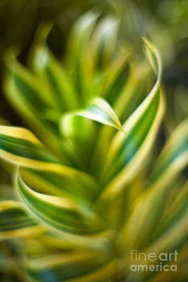 Tropical Photograph - Tropical Swirl by Mike Reid