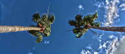 Manatee Co Photograph - Tropical Twins by Nicholas Evans