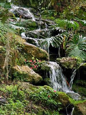 Photograph - Tropical Waterfall by Judy Wanamaker