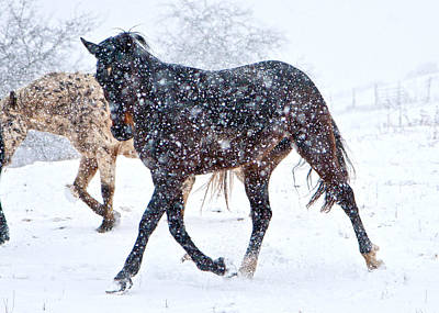 Trotting In The Snow Art Print by Betsy Knapp