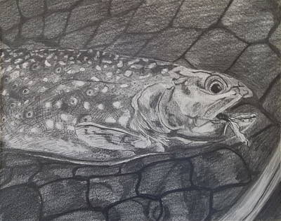 Brook Trout Drawing - Trout In Net by Michelle Grove