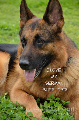 German Shephard Photograph - True Love by Lovely  Scenes Photography
