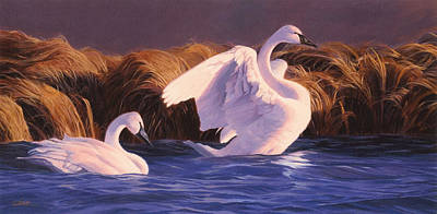 Wyoming Painting - Trumpeter Swans- Sunset On Oxbow Bend  by Shawn Shea