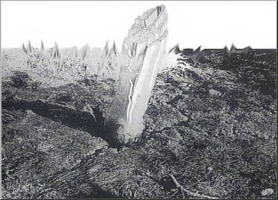 Photograph - Trunkscape 1980 by Glenn  Bautista