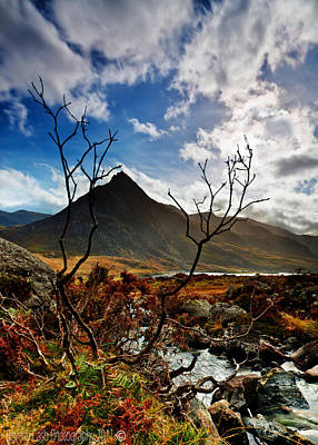 Art Print featuring the photograph Tryfan And Tree by Beverly Cash