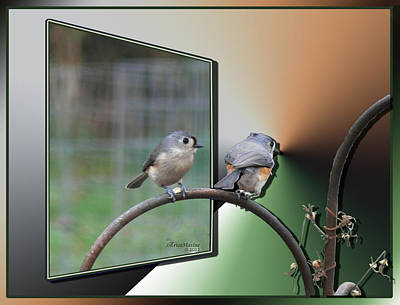 Photograph - Tufted Titmice-1st Place In Oof Contest by Ericamaxine Price
