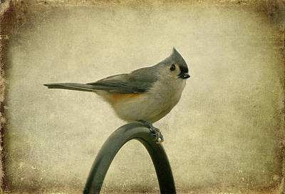 Parus Bicolor Photograph - Tufted Titmouse II by Sandy Keeton