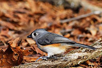 Titmouse Photograph - Tufted Titmouse by Larry Ricker
