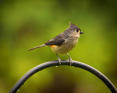 Titmouse Digital Art - Tufted Titmouse On Pole by Bill Tiepelman