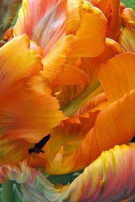 Photograph - Tulip 02 by Ann Bridges
