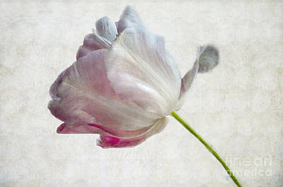 Photograph - Tulip 2 by Marion Galt