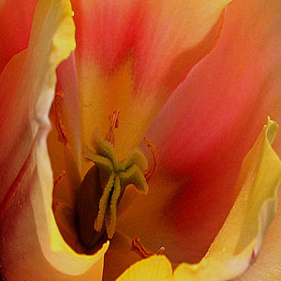 Tulip Abstract Art Print by Karen Harrison