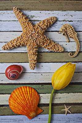 Tulip And Starfish Art Print by Garry Gay