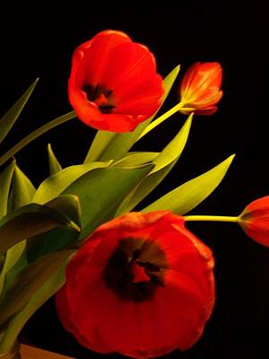 Photograph - Tulip Arrangement 1 by Peter Mooyman