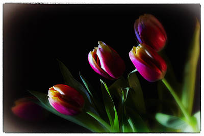 Tulip Dream Art Print