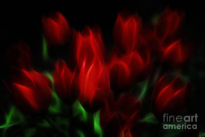 Tulip Essence Art Print