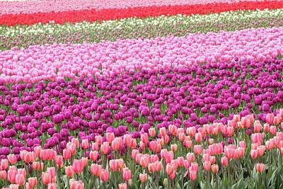 Photograph - Tulip Festival Washington by Pierre Leclerc Photography
