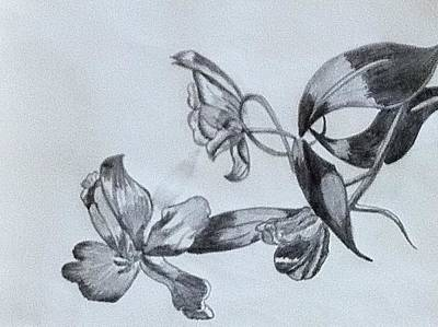 Tulip Flower Art Print by Monika