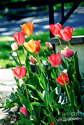 Tulip Garden Art Print by Carol F Austin