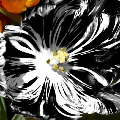 Pretty Wall Art - Photograph - Tulip Goes Wild by James Granberry