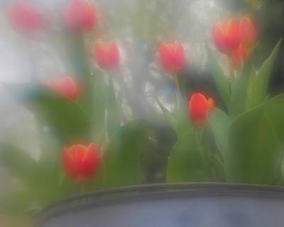 Photograph - Tulip Mist by Coby Cooper