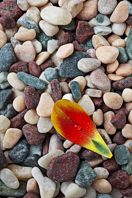 Tulip Petal And Wet Stones Print by Garry Gay