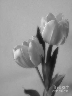 Photograph - Tulip Soft Focus Photograph by Kristen Fox