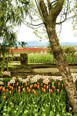 Skagit Digital Art - Tulip Time In The Skagit Valley by Beverly Hanson
