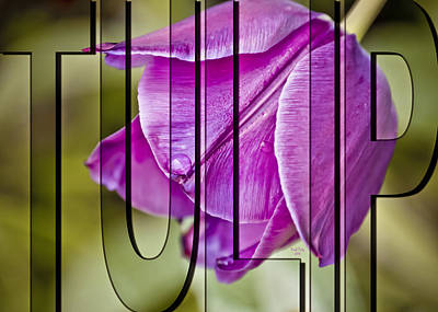 Photograph - Tulip by Trish Tritz