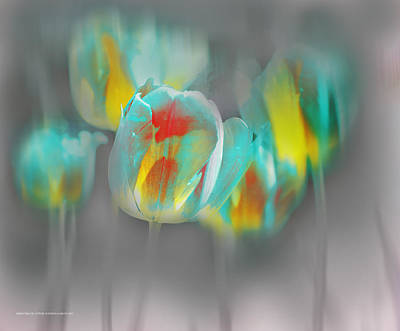 Digital Art - Tulipanes En Domingo by Alfonso Garcia