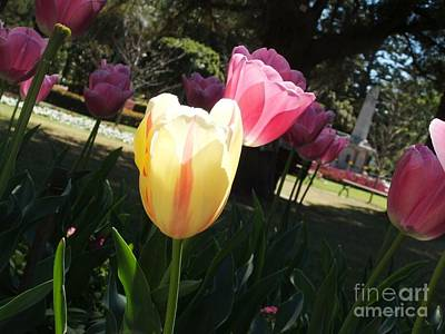 Art Print featuring the photograph Tulips 2 by Therese Alcorn
