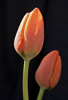 Tulips 2682 Art Print by Michael Peychich