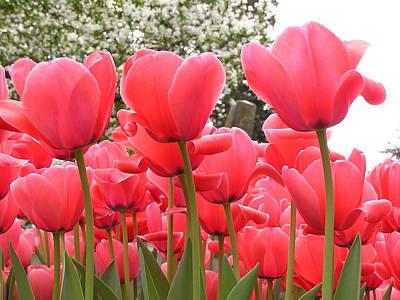 Tulips Art Print by Andrea Drake