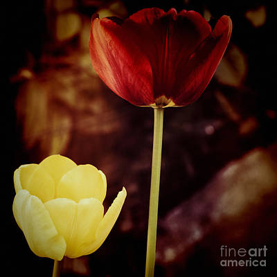Photograph - Tulips At Dusk by Silvia Ganora