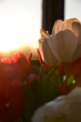 Photograph - Tulips At Sunset by Bonnie Myszka