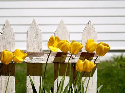 Tulips At The End Of The Fence Art Print by HW Kateley