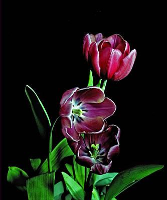 Photograph - Tulips. by Chris  Kusik
