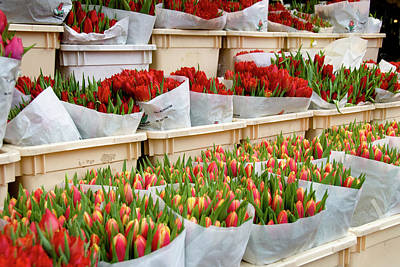 Flowers Shop Photograph - Tulips Flowers by Daisy Su Photography