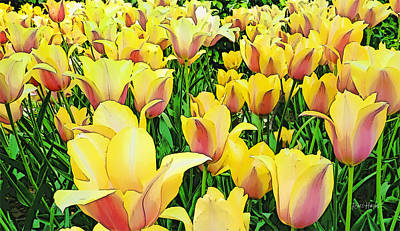 Tulips In New York  Original by Russ Harris