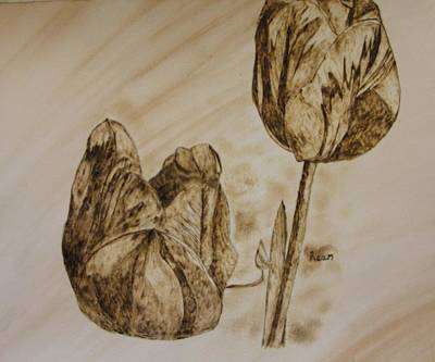 Pyrography Pyrography - Tulips In Sepia by Maureen Hargrove