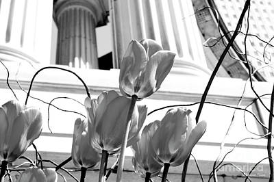 Photograph - Tulips In The City by Milena Ilieva