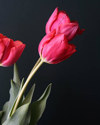 Art Print featuring the photograph Tulips by Lou Belcher