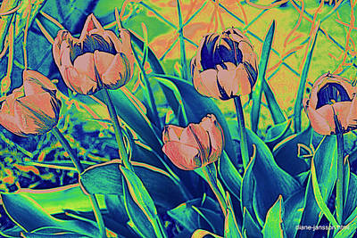 Photograph - Tulips Of Another Color by Diane montana Jansson