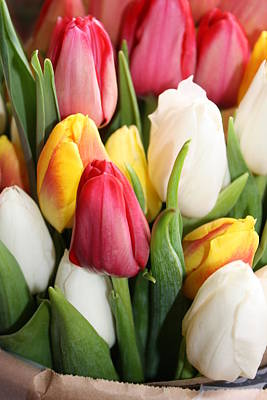 Photograph - Tulips Of Seattle by Bruce Bley